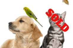 Pet store sold 2